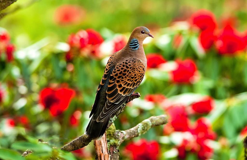 birdhima