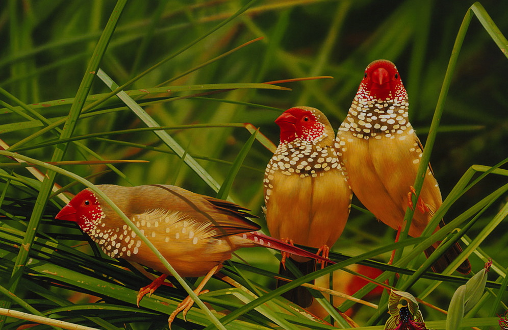birds-india-wildlife-bird